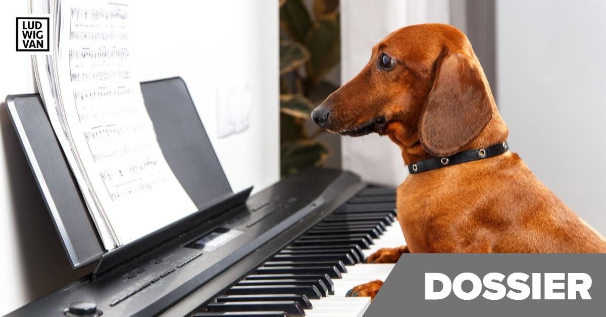chien jouant du piano - cover animaux et musique