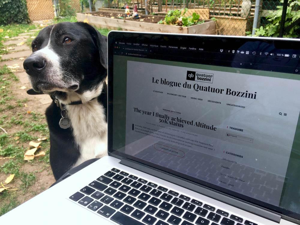Arnold, mascotte du Quatuor Bozzini, aimerait bien pouvoir lire leur nouveau blogue. (Photo: courtoisie du Quatuor Bozzini)