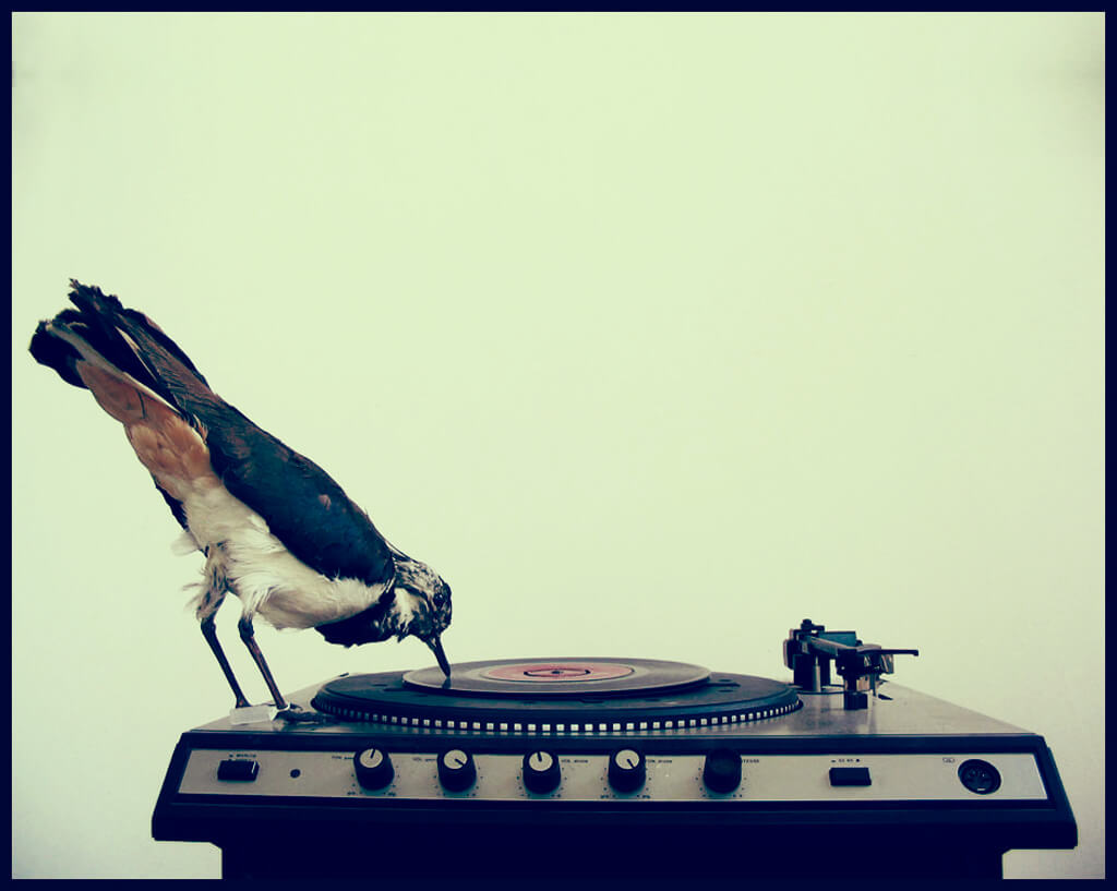 bird_and_turntable