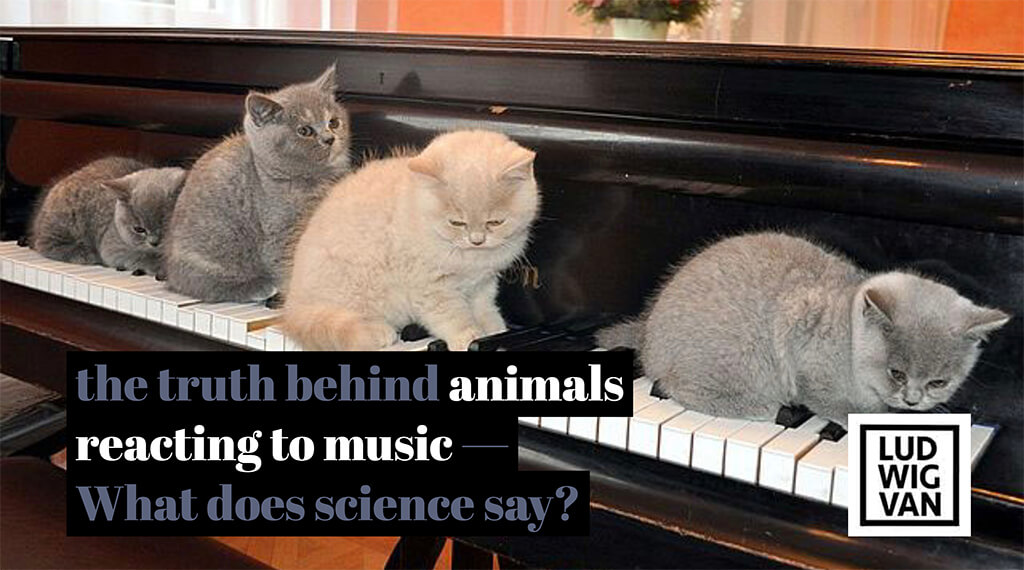 Cats on pianos, Kittens